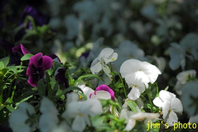 花は華_a0158797_121122.jpg