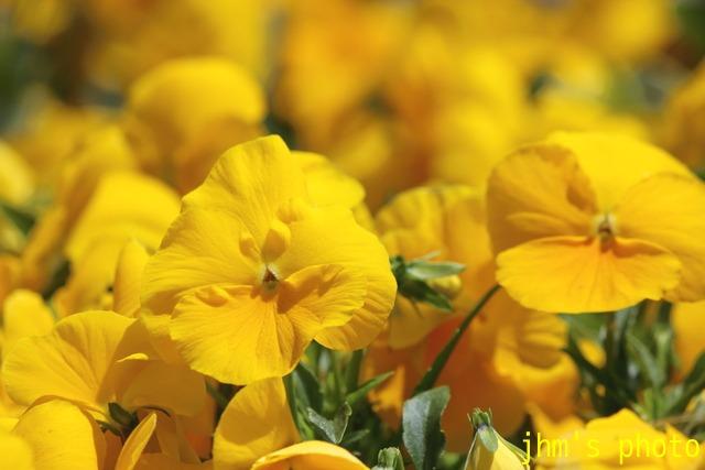 花は華_a0158797_122589.jpg