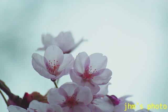 花は華_a0158797_1796.jpg