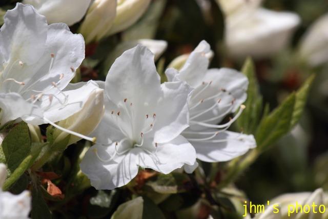花は華_a0158797_194618.jpg