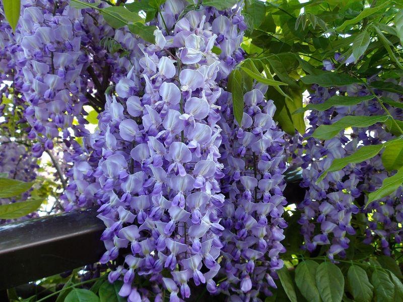 朱と紫の幻想_c0025115_2212131.jpg
