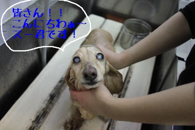 犬濯屋が。。。_b0130018_22585099.jpg