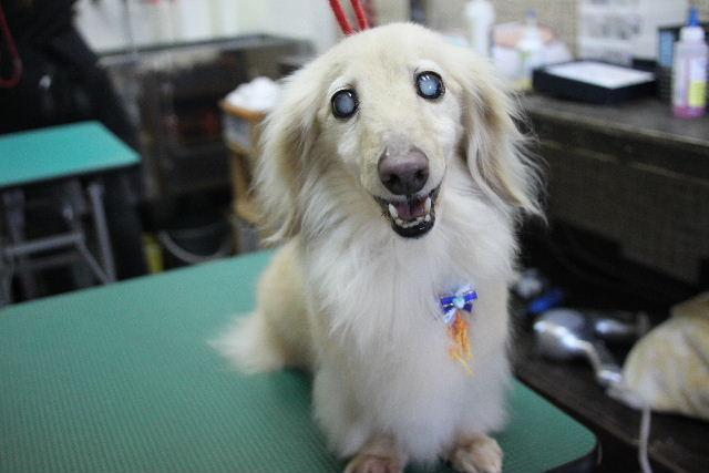 犬濯屋が。。。_b0130018_22591562.jpg