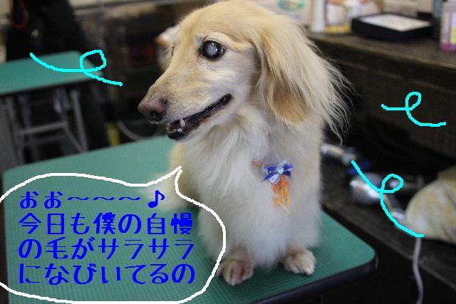 犬濯屋が。。。_b0130018_22591896.jpg