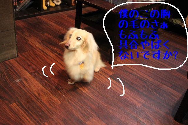 犬濯屋が。。。_b0130018_22594012.jpg