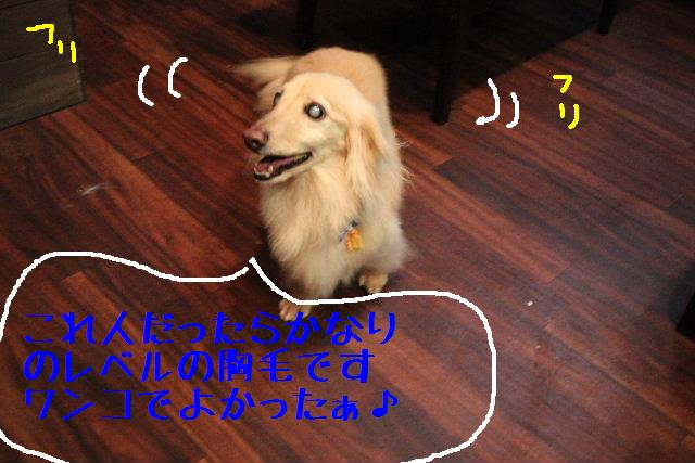 犬濯屋が。。。_b0130018_22594385.jpg