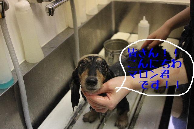 犬濯屋が。。。_b0130018_23103818.jpg