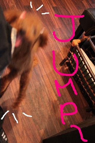 犬濯屋が。。。_b0130018_2311017.jpg