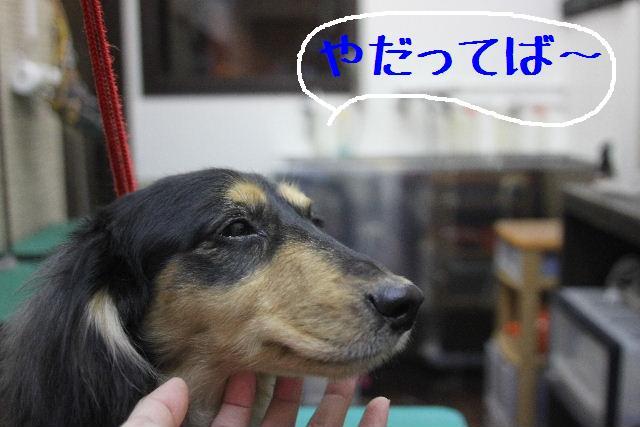 犬濯屋が。。。_b0130018_23111241.jpg