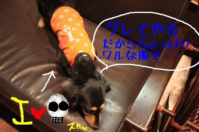 犬濯屋が。。。_b0130018_23111820.jpg