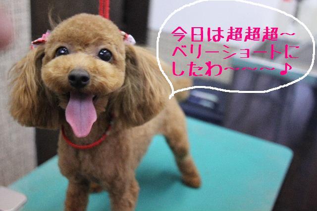 犬濯屋が。。。_b0130018_231127.jpg