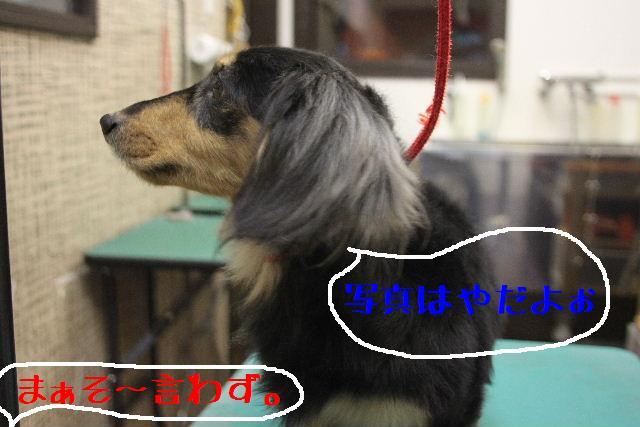 犬濯屋が。。。_b0130018_2311727.jpg