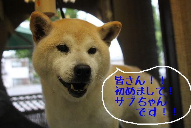 犬濯屋が。。。_b0130018_23131039.jpg