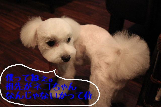 犬濯屋が。。。_b0130018_23143967.jpg