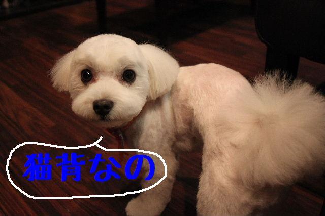 犬濯屋が。。。_b0130018_2314479.jpg