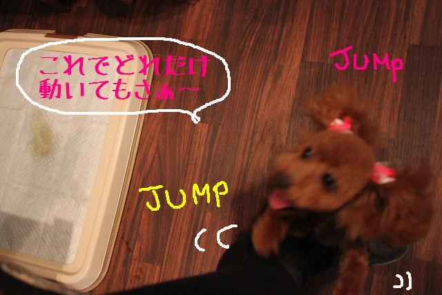 犬濯屋が。。。_b0130018_23159.jpg