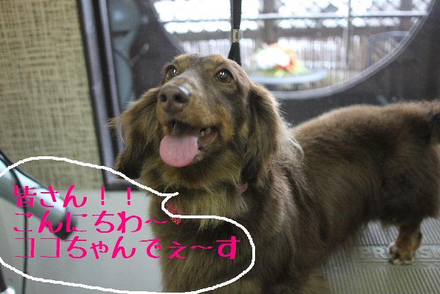 犬濯屋が。。。_b0130018_231704.jpg