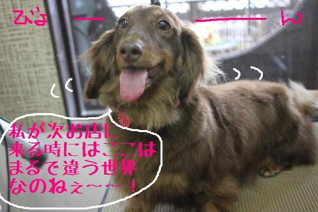 犬濯屋が。。。_b0130018_2317947.jpg