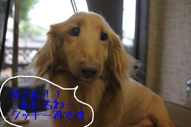犬濯屋が。。。_b0130018_23193074.jpg