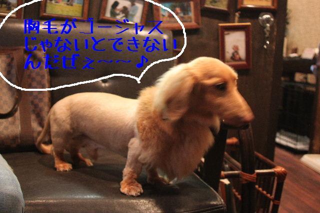 犬濯屋が。。。_b0130018_23194540.jpg