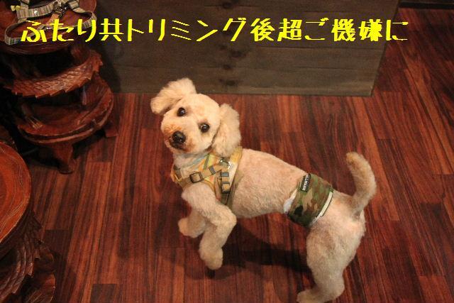 犬濯屋が。。。_b0130018_23215422.jpg