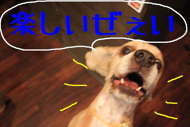 犬濯屋が。。。_b0130018_23221558.jpg