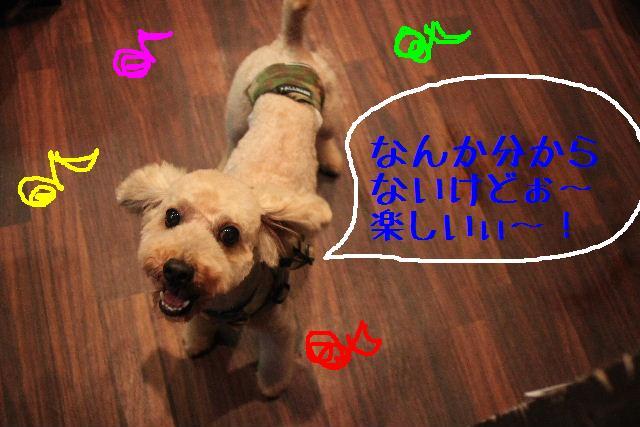 犬濯屋が。。。_b0130018_232228.jpg