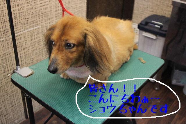 犬濯屋が。。。_b0130018_2322389.jpg