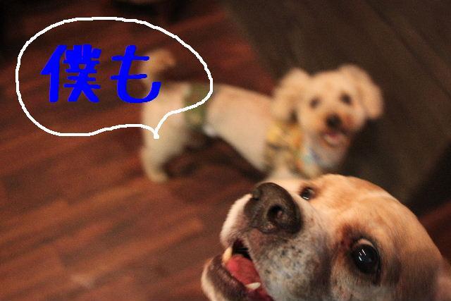 犬濯屋が。。。_b0130018_232298.jpg