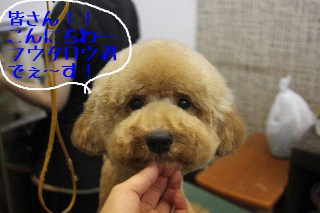 犬濯屋が。。。_b0130018_2324137.jpg