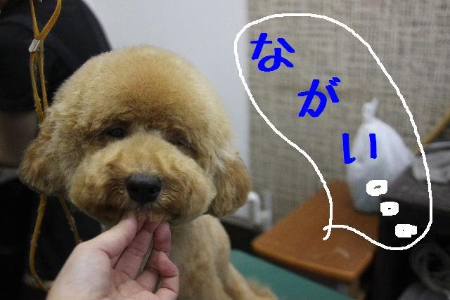 犬濯屋が。。。_b0130018_23241514.jpg