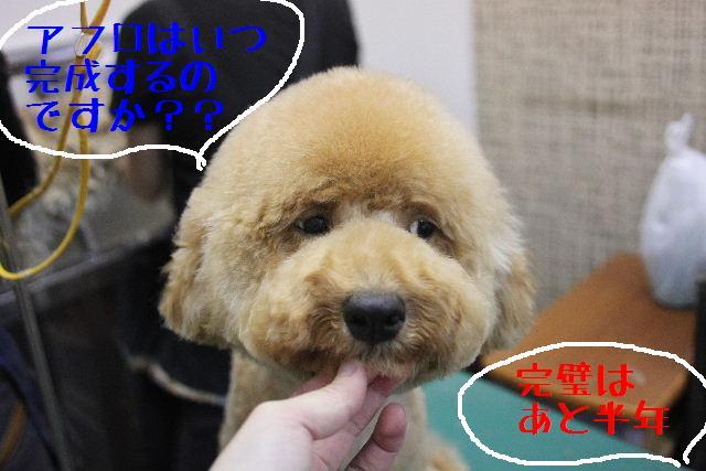 犬濯屋が。。。_b0130018_2324728.jpg