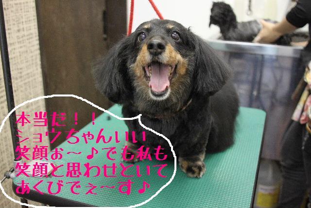 犬濯屋が。。。_b0130018_2331048.jpg