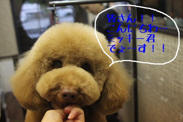 犬濯屋が。。。_b0130018_2343543.jpg