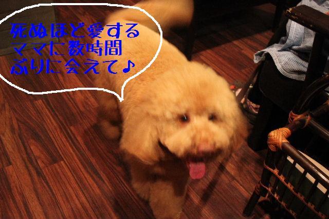 犬濯屋が。。。_b0130018_2344266.jpg