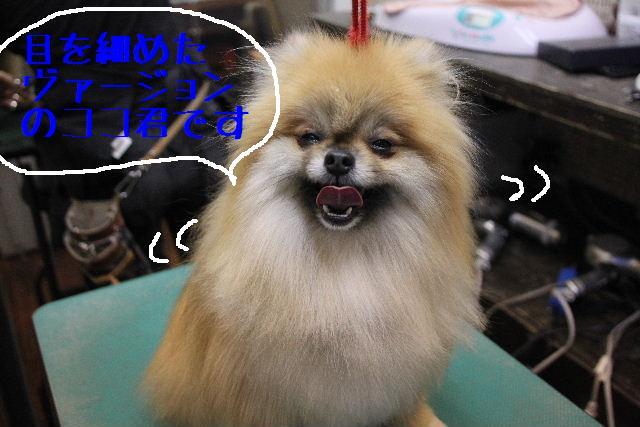 犬濯屋が。。。_b0130018_2361660.jpg