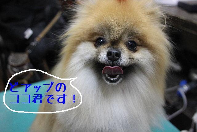 犬濯屋が。。。_b0130018_236398.jpg