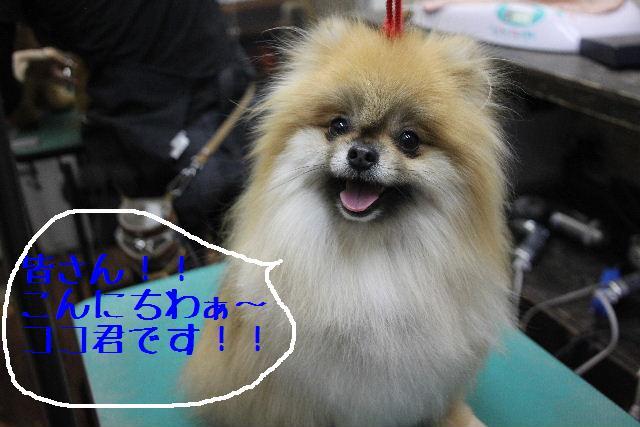 犬濯屋が。。。_b0130018_236993.jpg