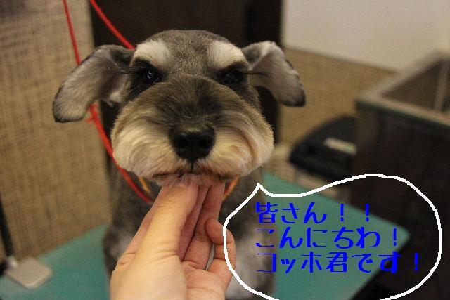 犬濯屋が。。。_b0130018_2374030.jpg