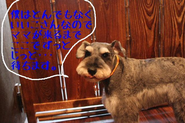 犬濯屋が。。。_b0130018_2374587.jpg