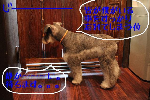 犬濯屋が。。。_b0130018_237515.jpg