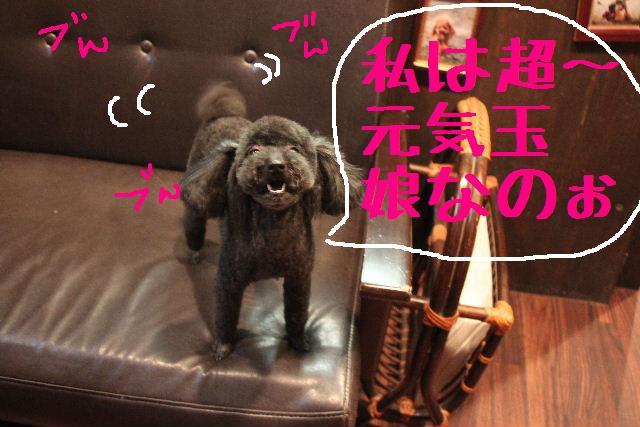 犬濯屋が。。。_b0130018_2391524.jpg