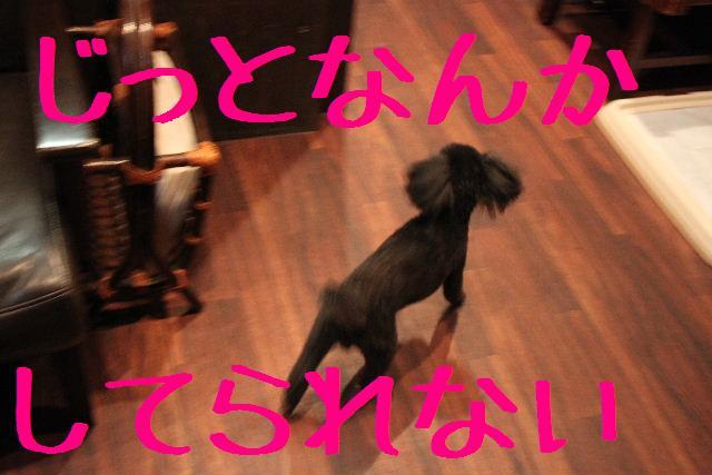 犬濯屋が。。。_b0130018_2391941.jpg