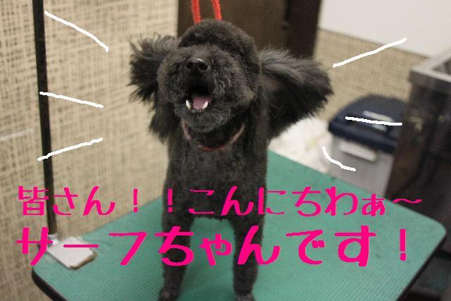 犬濯屋が。。。_b0130018_239953.jpg