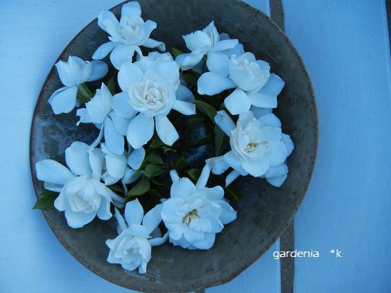 クチナシの花を飾ってみました♪_d0269832_11484247.jpg