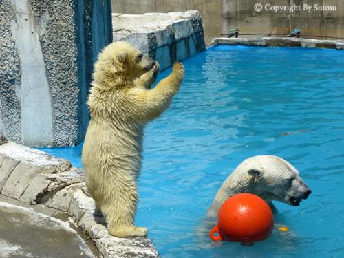 晴天の動物園_d0154140_23124399.jpg