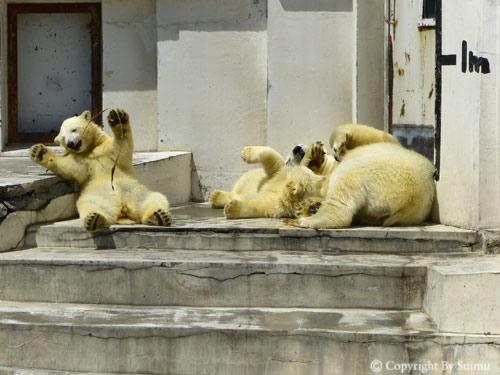晴天の動物園_d0154140_23144622.jpg
