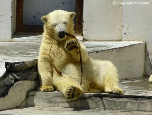晴天の動物園_d0154140_23193661.jpg