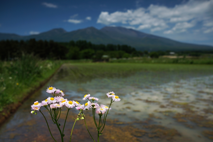 【NEX-7】 最終評価 レンズ編 2  Carl Zeiss Sonnar 24mm 1.8 ( SEL24F18Z )_c0035245_3435290.jpg