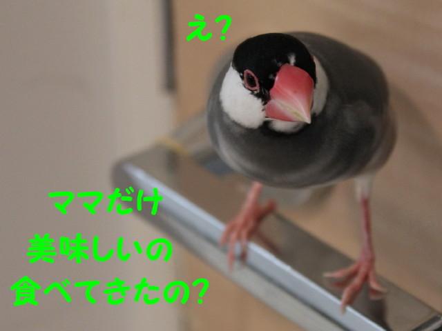 b0158061_20462260.jpg